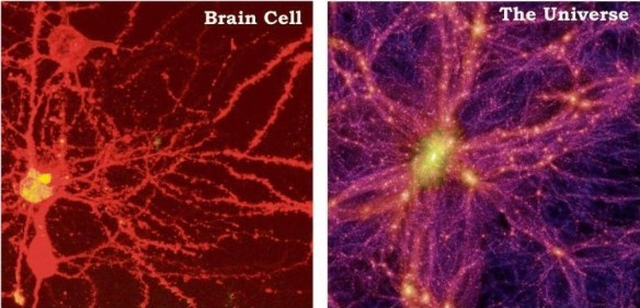 brain-cell-universe-1