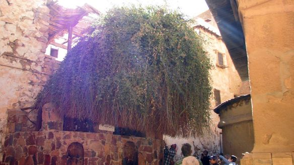Burning_Bush,_St_Catherine's_Monastery